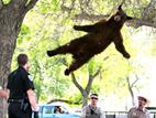"""[组图]小""""飞熊""""遇车祸:生存还是死亡,真是个熊问题"""