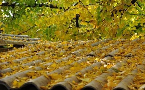 邂逅秋天的童话