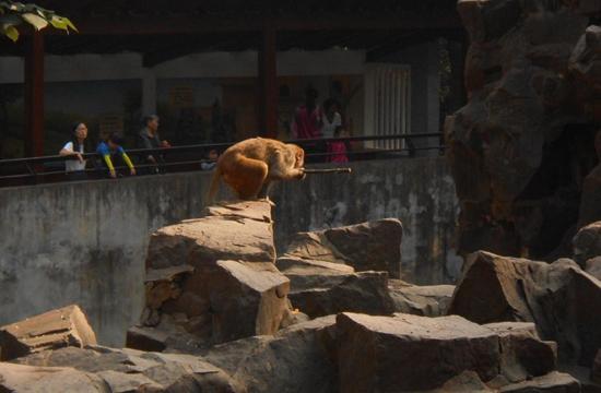 动物园摄影作品集 _新蓝网