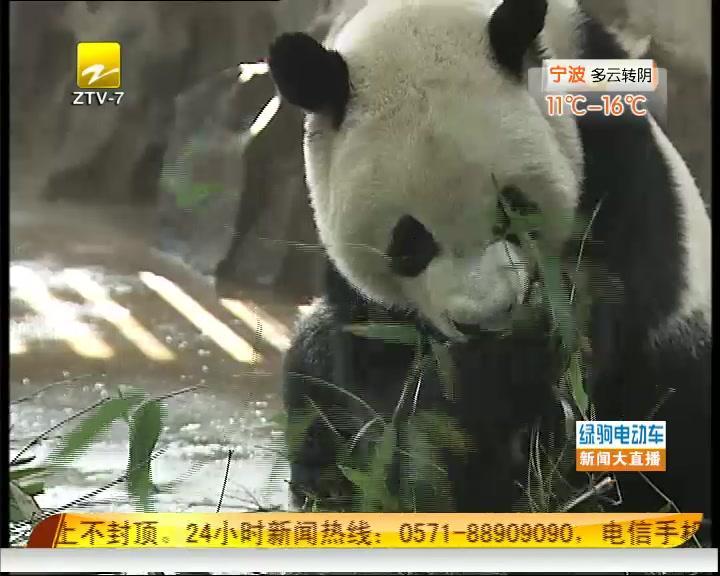 动物园动物过冬有妙招
