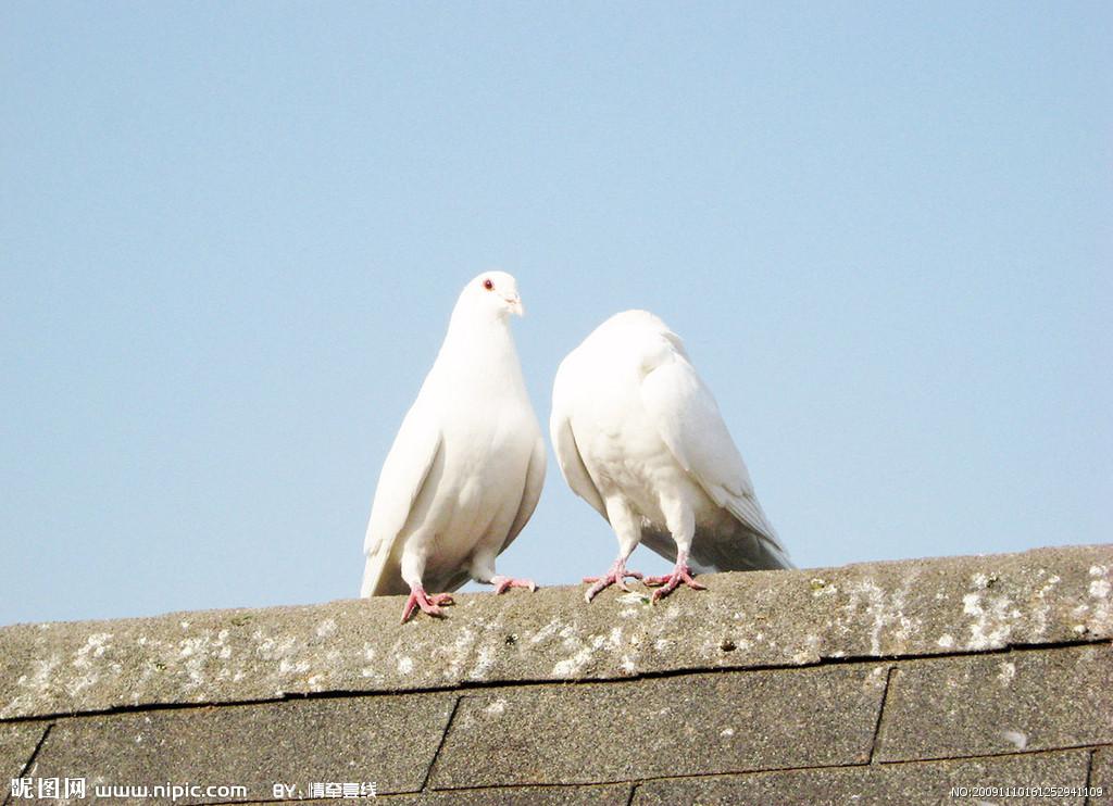 农业部在鸽子样品中检测出h7n9禽流感病毒