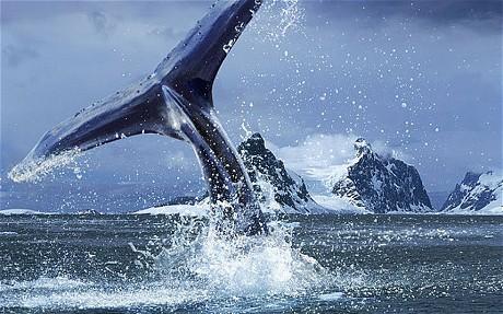 到南极体验一次终身难忘的旅行