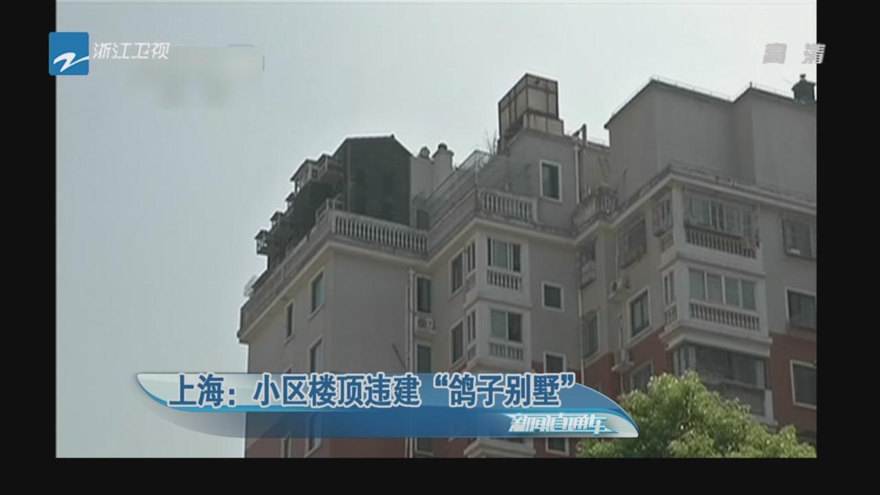 """上海:小区楼顶违建""""鸽子别墅"""""""