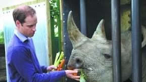 英国威廉王子吁保护动物又去打猎被批言行不一
