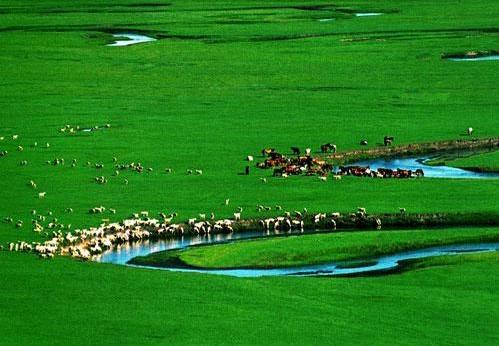 盘点国内五条风景最美草原自驾路线