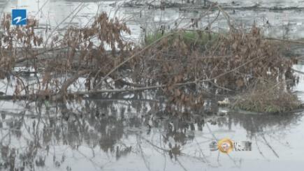 印染廠違規排污非法占用河道