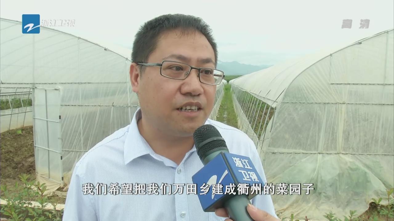 """衢州:猪倌变菜农 万田乡成""""菜园子"""""""