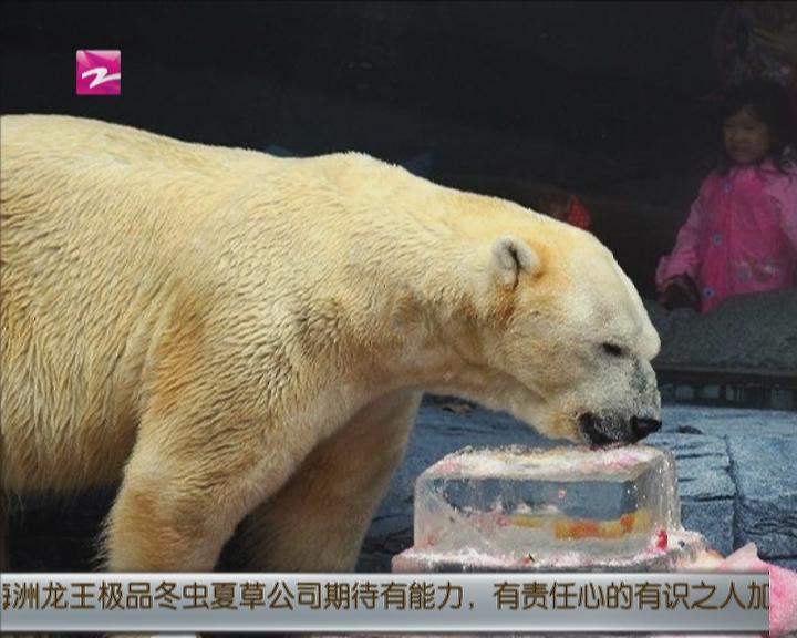 新加坡动物园为北极熊庆生
