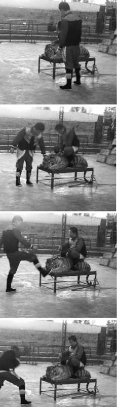 网友拍摄的视频截图,包括驯兽师脚踹、抽打老虎的镜头。