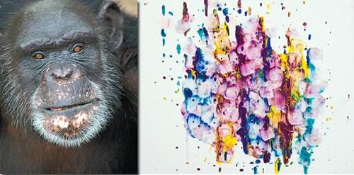 黑猩猩用舌头作画颜色调配得当获1万奖金(图)