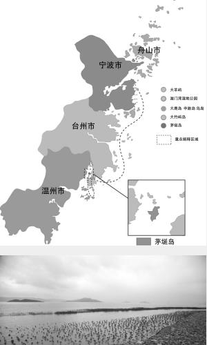 乐清湾生长着全球最北的红树林