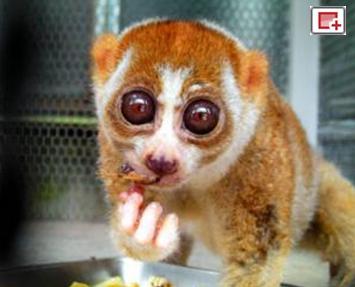 日本京都大学真空冷冻珍稀动物精子实验获成功