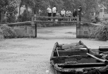 长漕河上漂满了浮萍。记者唐严摄