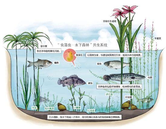 那些小鱼小草小螺蛳 为30条黑臭河摘帽