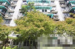 树园小区,枫树顶部已经有一片片的枯黄。记者 胡聪 摄