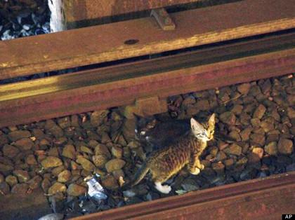 2只顽皮小猫躲铁轨下纽约地铁停驶90分钟(图)