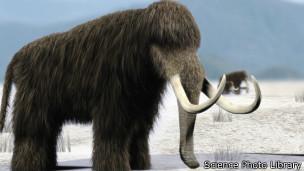 证据显示:猛犸象绝种因气候变化而非人类猎杀