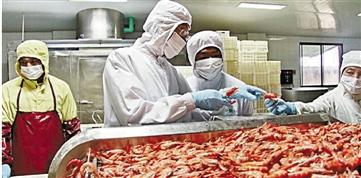 经营南美白对虾的企业,今年特别忙。