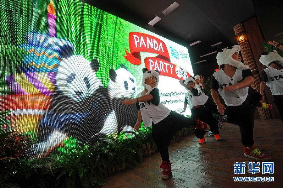 """(国际)(3)新加坡:大熊猫""""凯凯""""和""""嘉嘉""""过生日"""