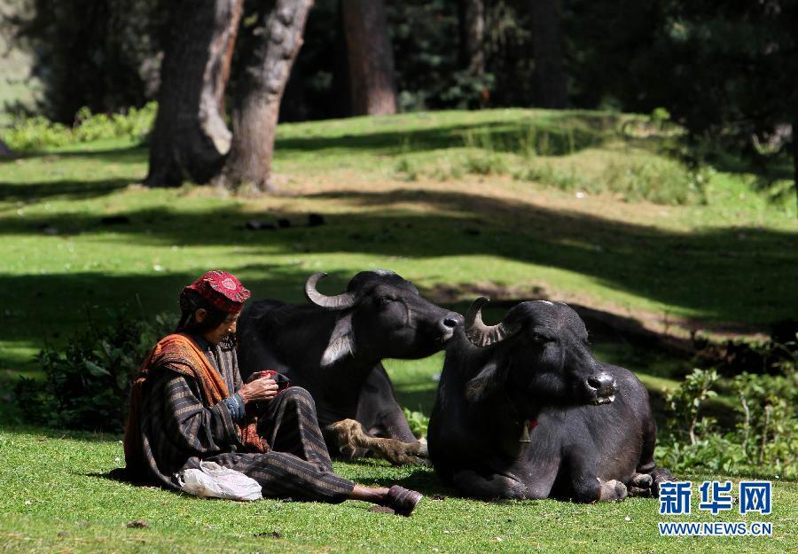 (国际)(8)山上的生活——走近印控克什米尔山区的游牧居民