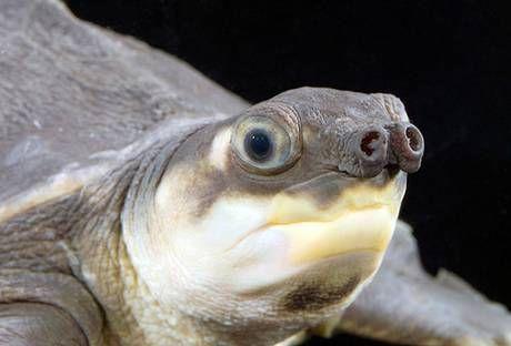 英国举办最丑动物票选活动 海底怪鱼水滴鱼夺冠(组图)