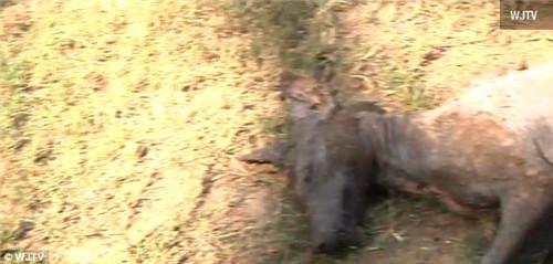 猎人捕获疑似吸血怪兽外形像狗眼睛鲜红(组图)