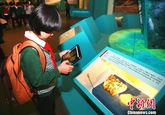 图为:学生拍摄《浙江大地十亿年》展览中的岩石标本。 李晨韵 摄
