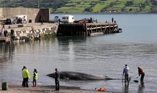 巨型鲸鱼搁浅海滩引来附近一些民众前来围观。