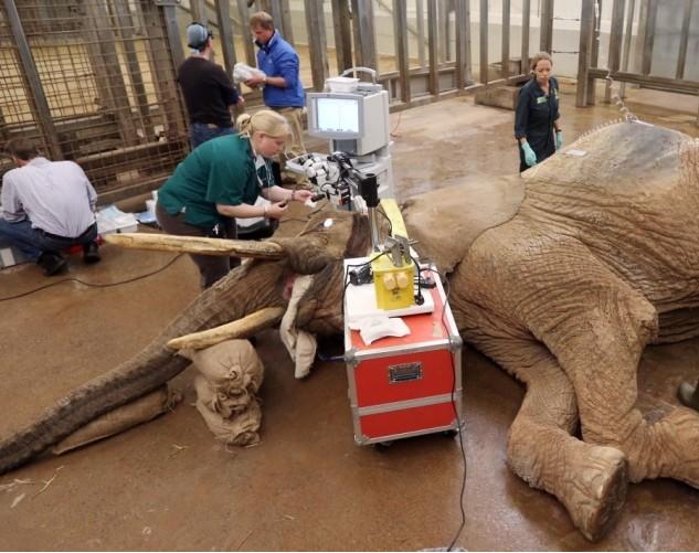 镜头记录兽医给动物看病(组图)