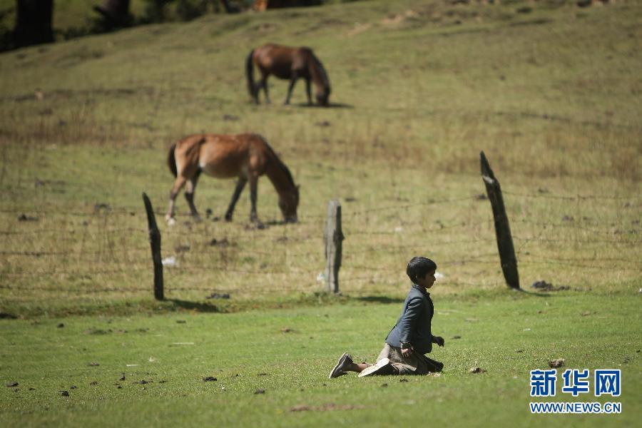 (国际)(9)山上的生活——走近印控克什米尔山区的游牧居民