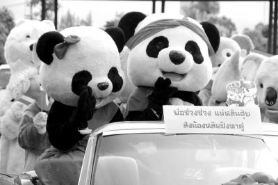 """泰国出生首只中国大熊猫""""林冰""""回国择偶(图)"""
