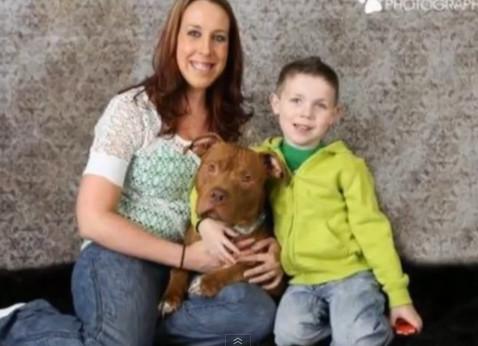比特犬安乐死前被领养4天后救新主人4岁儿一命