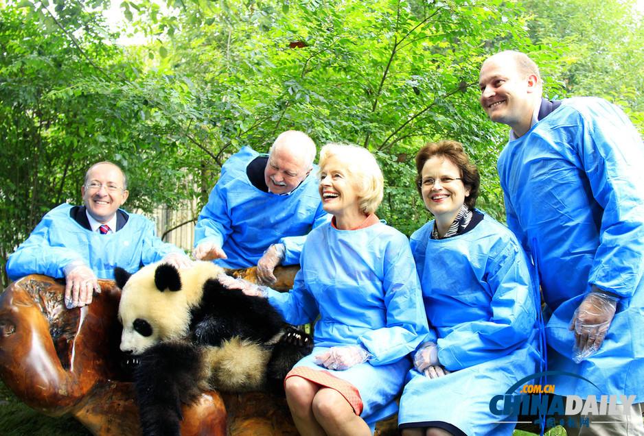 澳总督布赖斯访问成都 与大熊猫亲密接触