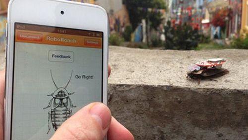 美国企业发明遥控蟑螂软件据称可控其大脑(图)