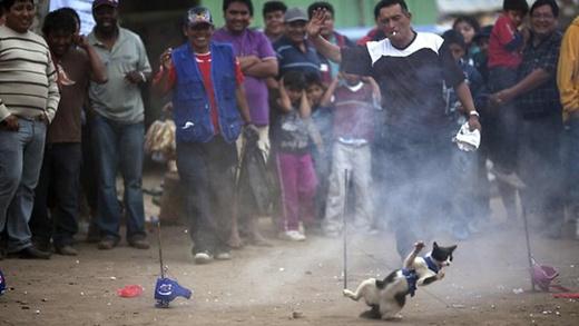 """秘鲁神秘祭典""""圣艾菲杰尼亚""""宰杀活猫烤来吃"""