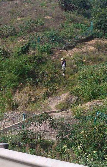 宁波网友发微博称,高速路上堵得慌,乘客下车把人家农田里的冬瓜都偷走了