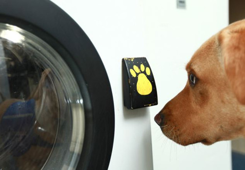 发明家米德尔顿与一家慈善机构合作开发了能够完全由工作犬操作的洗衣机。