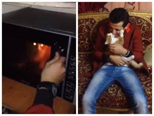 黎巴嫩男子微波炉烹猫引国际公愤当地无法可治