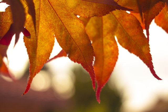 40 Stunning Photos Of Fall Foliage