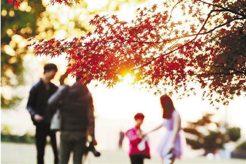 婺州公园的红枫。