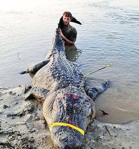 美国一长约4米重达330公斤巨鳄被捕获(组图)