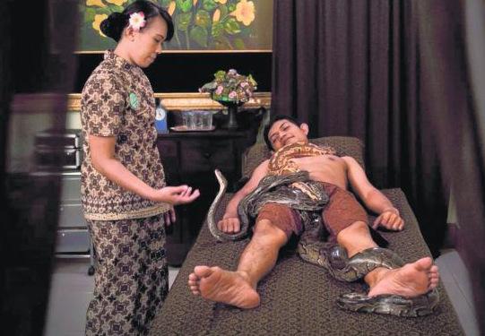 印尼另类蟒蛇按摩服务顾客:肾上腺素狂飙(图)
