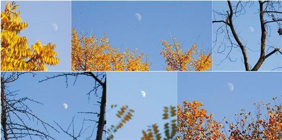昨天,杭城暂别雾霾天,晴朗回归。西湖上空,半个月亮清晰可见