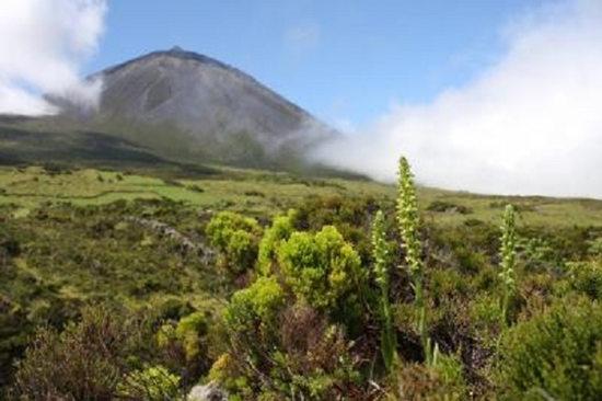 稀有蝴蝶兰被认为灭绝200年重现欧洲火山脊(图)