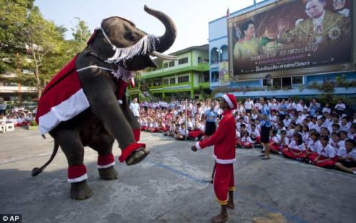 在泰国,不仅训练员穿起了圣诞老人的服装,就连大象的服装也充满了节日气氛。