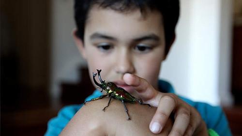 另类圣诞礼物澳洲父母送孩子昆虫(图)