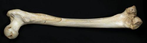 西班牙发现40万年前最古老人类DNA引发新谜团