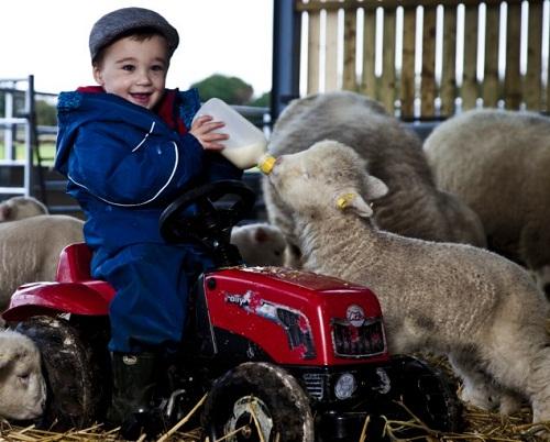 2岁男孩成英国最小牧人管6只羊能力出色(图)