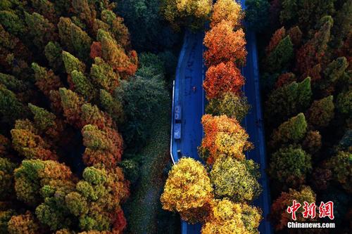 杨公堤、曙光路、南山路、万松岭路,环城东路……杭州有太多美景。
