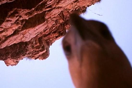 """海鹰在摄像机镜头前玩""""自拍"""""""